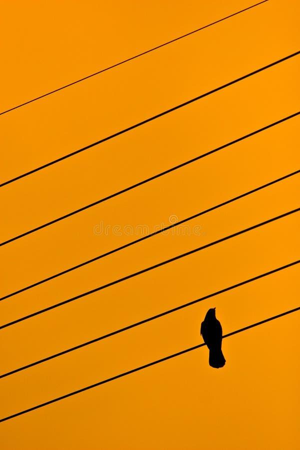Un pájaro en el alambre fotografía de archivo libre de regalías