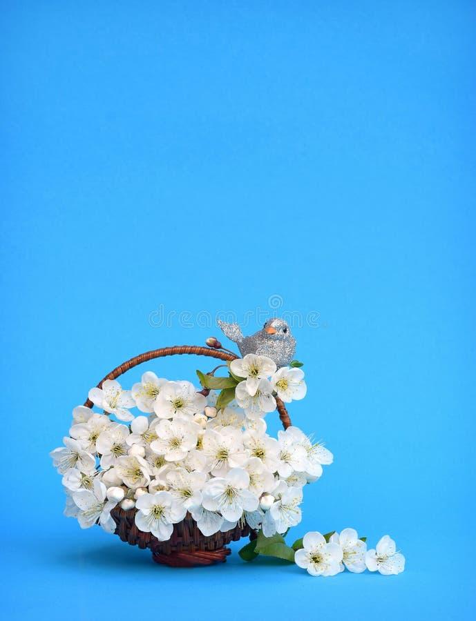 Un pájaro en una flor de cerezo Primavera tarjeta Fondo del resorte fotos de archivo