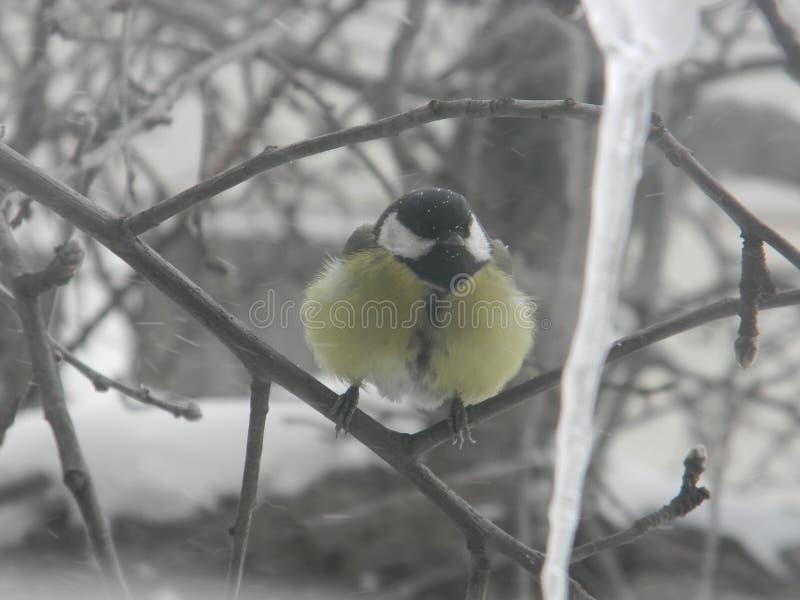 Un pájaro en una ramificación imagen de archivo libre de regalías