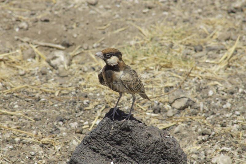Un pájaro en una roca en el salvaje fotografía de archivo