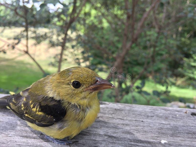Un pájaro encaramado en una verja fotografía de archivo libre de regalías