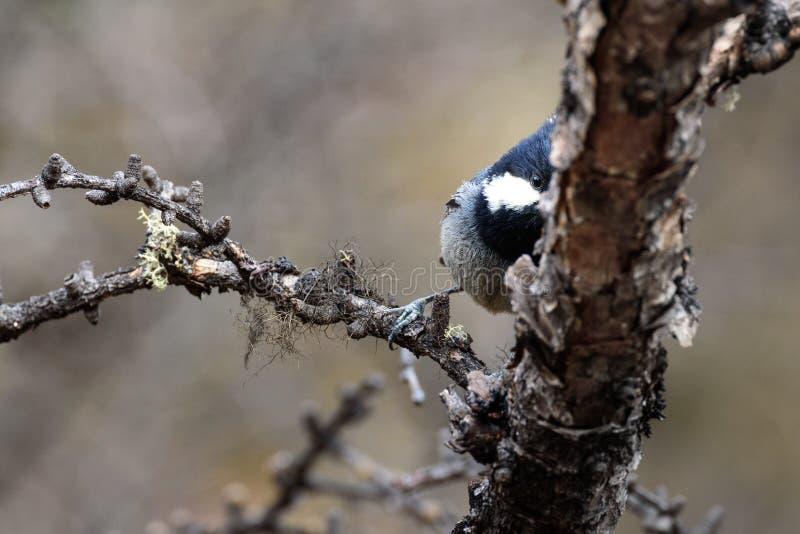 Un pájaro es fotógrafo tímido imagenes de archivo