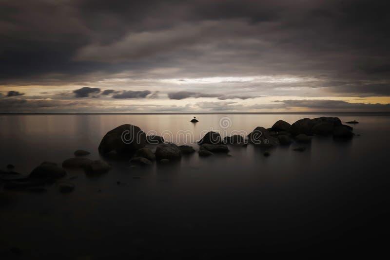 Un pájaro muy solo en una piedra en el mar imagen de archivo libre de regalías