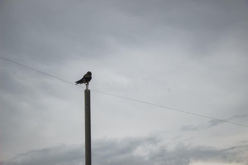 Un pájaro que se sienta en un polo Cielo gris wallpaper fotos de archivo