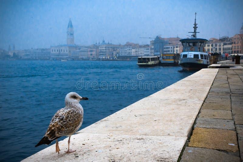Un pájaro se está sentando en el borde de la costa en la calle de Venecia fotografía de archivo