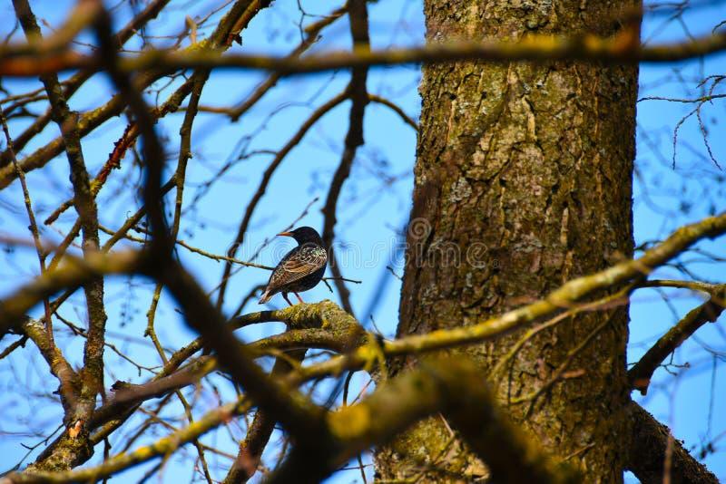 Un pájaro se sienta en una rama de árbol imagenes de archivo