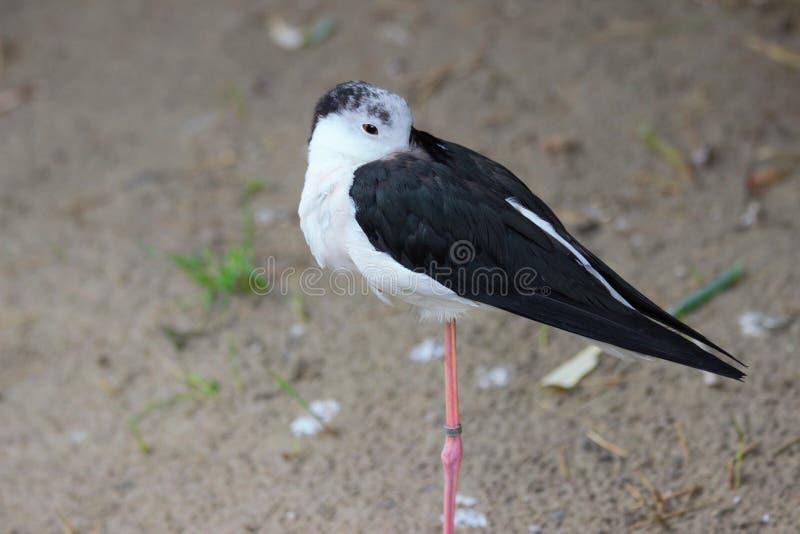 Un pájaro solo que se coloca en parque zoológico en Baviera Alemania en Nuremberg imagenes de archivo