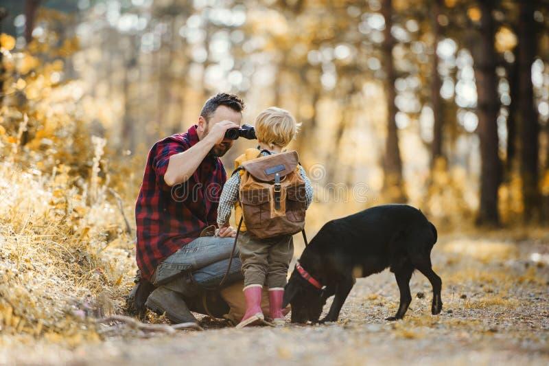 Un père mûr avec un chien et un fils d'enfant en bas âge dans une forêt d'automne, utilisant des jumelles photo libre de droits