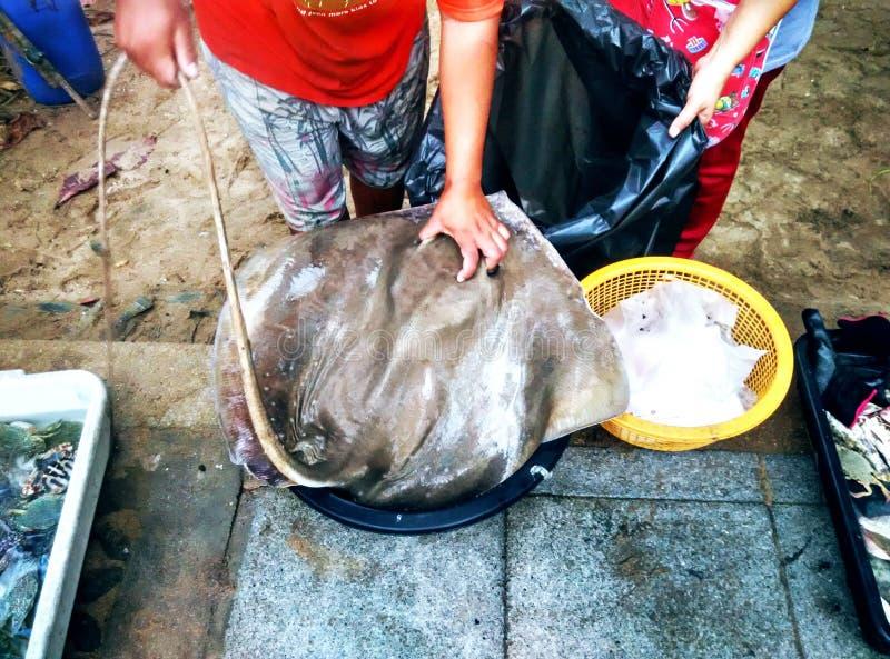Un pêcheur a mis des poissons de pastenague dans l'enveloppe photos stock