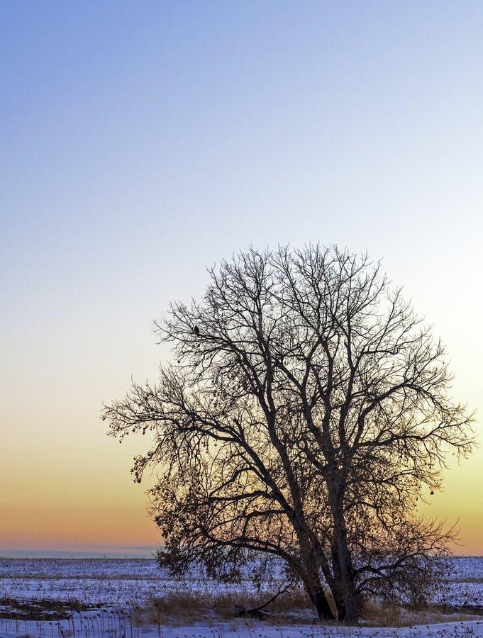 Un paesaggio rurale invernale in Colorado immagini stock libere da diritti
