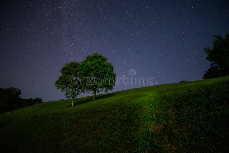 Un paesaggio scenico di notte di grande albero due con molti star immagine stock libera da diritti