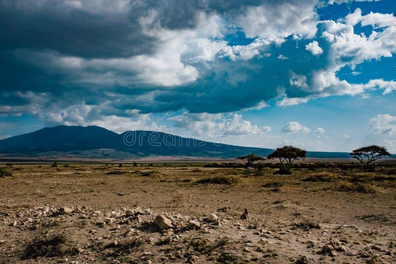 Un paesaggio sterile dopo una stagione di nessuna pioggia nel parco nazionale di Serengeti, Tanzania immagine stock libera da diritti