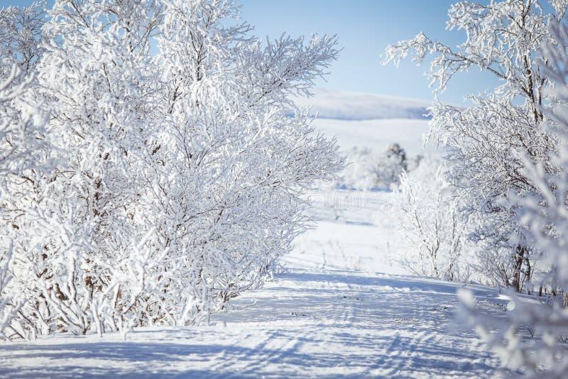 Un paisaje blanco hermoso de un día de invierno nevoso con las pistas para la moto de nieve o el trineo del perro imagenes de archivo