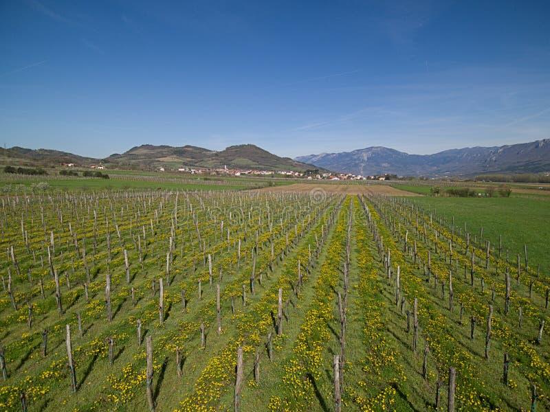 Un paisaje con un viñedo y un pueblo en el fondo en un día de primavera soleado foto de archivo libre de regalías