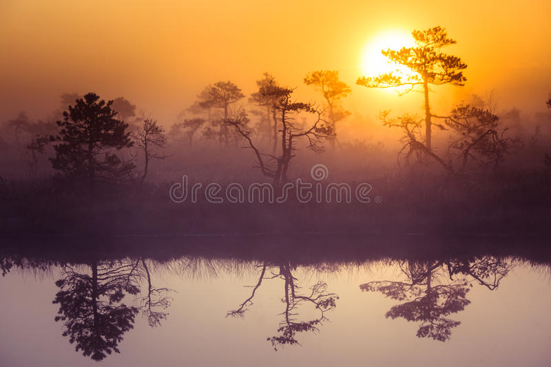 Un paisaje hermoso, soñador de la mañana del sol que sube sobre un pantano brumoso Mirada colorida, artística fotos de archivo
