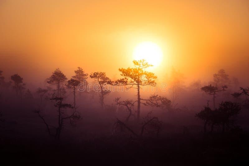 Un paisaje hermoso, soñador de la mañana del sol que sube sobre un pantano brumoso Mirada colorida, artística foto de archivo