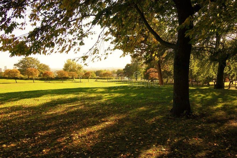 Un paisaje soleado del otoño fotografía de archivo