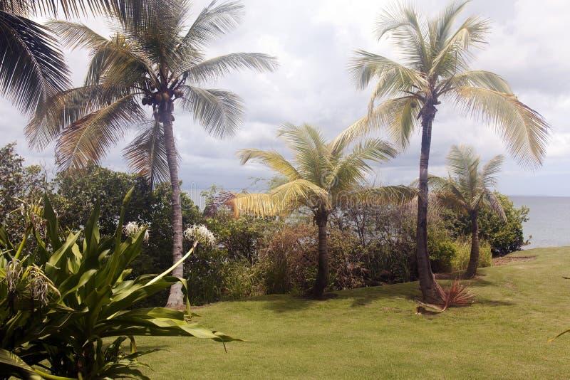 Un paisaje, un verde y un océano hermosos en Puerto Rico imágenes de archivo libres de regalías