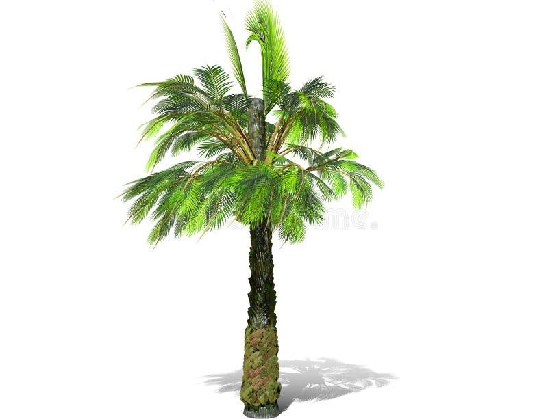 Un palmier grand d'isolement au-dessus d'un fond blanc illustration de vecteur
