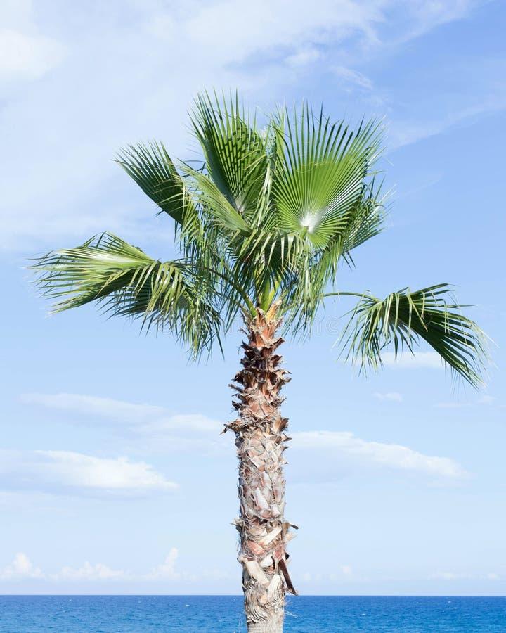Un palmier sur le fond du ciel bleu et de la mer images stock