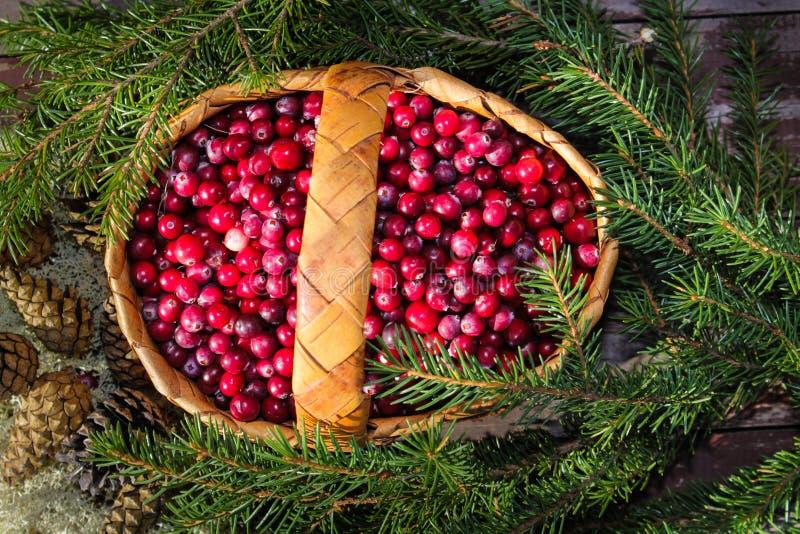 Download Un Panier De Canneberge Sauvage Mûre De Baies Photo stock - Image du sapins, vitamines: 77161020