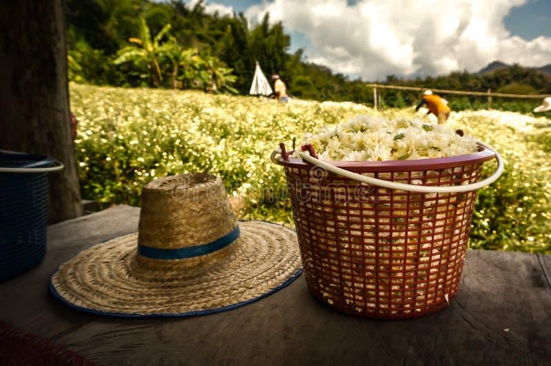 Un panier de chrysanthème de fleurs blanches images libres de droits