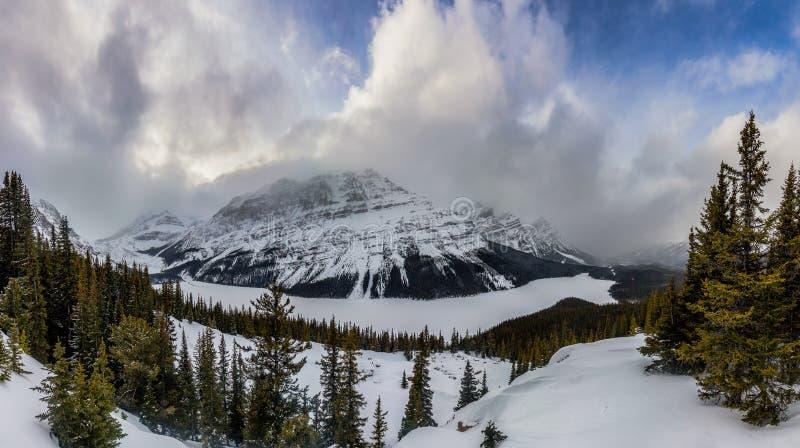 Un panorama del lago nevado Peyto en el parque nacional de Banff fotos de archivo libres de regalías