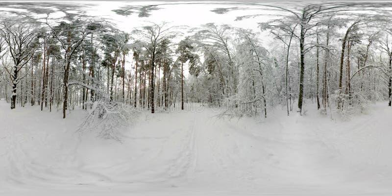 Un panorama di 360 VR della foresta nella neve nell'inverno fotografia stock libera da diritti