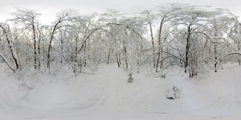 Un panorama di 360 VR della foresta nella neve nell'inverno immagine stock