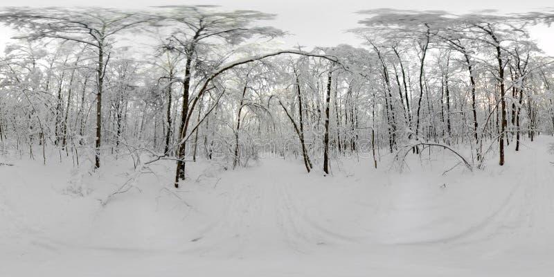 Un panorama di 360 VR della foresta nella neve nell'inverno immagine stock libera da diritti