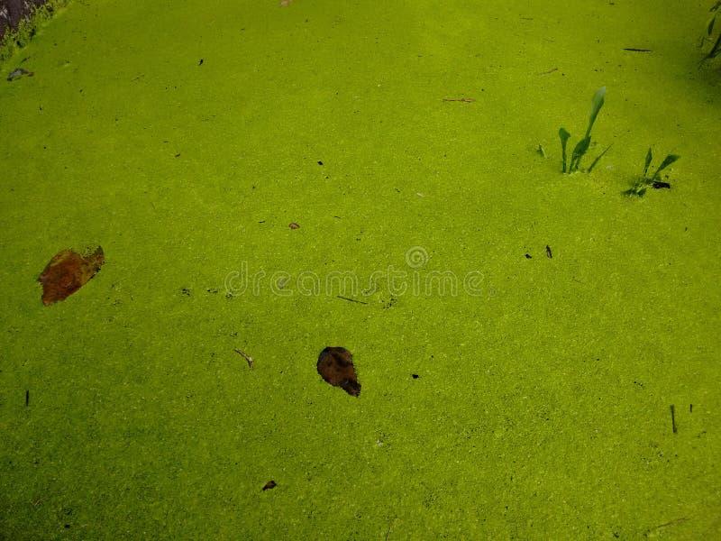 Un pantano imagen de archivo