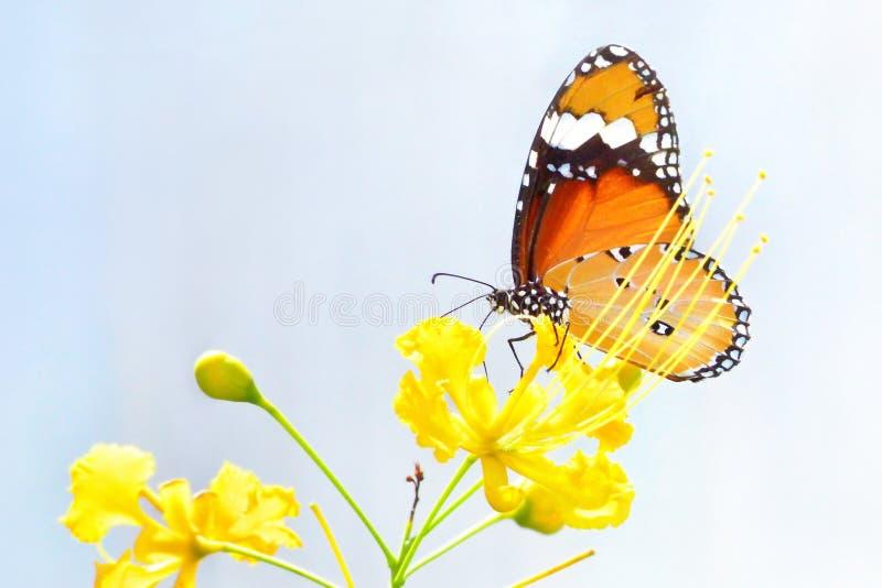 un papillon été perché sur la belle fleur photos libres de droits
