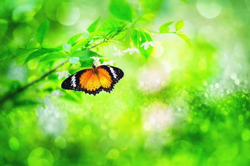 un papillon été perché sur la belle fleur photo libre de droits