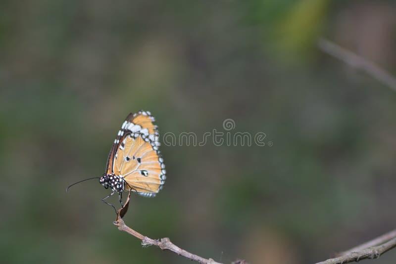 Un papillon été perché sur les belles feuilles photographie stock libre de droits