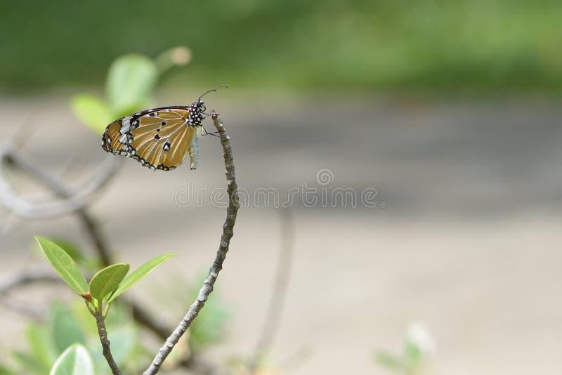 Un papillon été perché sur les belles feuilles photos stock