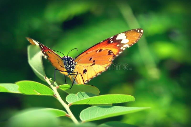Un papillon été perché sur les belles feuilles images libres de droits