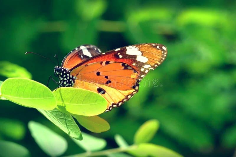 Un papillon été perché sur les belles feuilles image stock