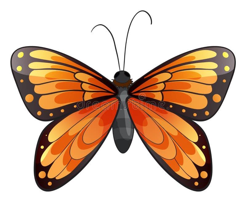 Un papillon illustration stock