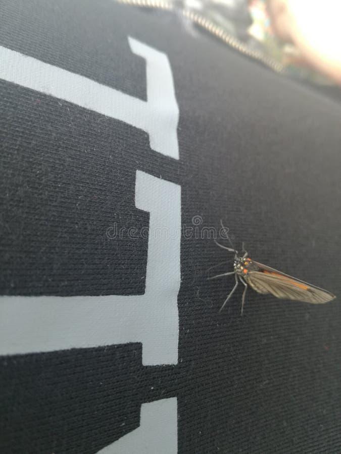 Un papillon heureux photographie stock