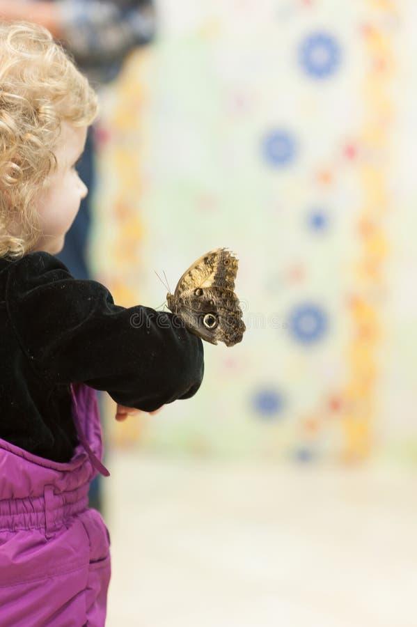 Un papillon se repose sur la main d'un garçon Exposition de papillon photographie stock libre de droits