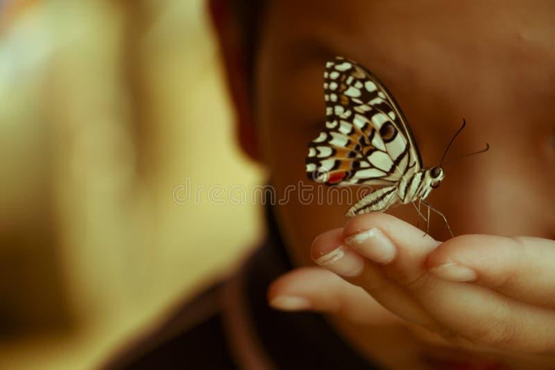 Un papillon sur peu de main photos stock