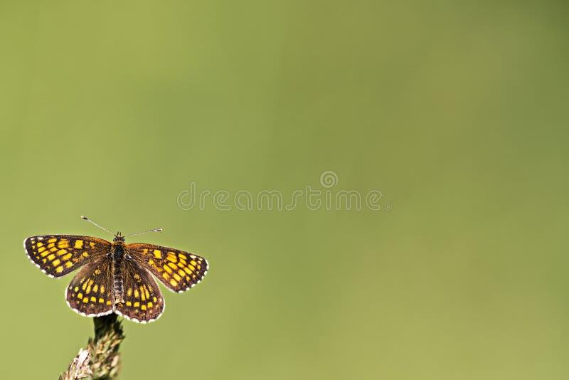 Un papillon, un fond de ressort photographie stock libre de droits