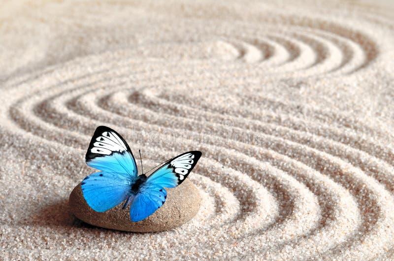 Un papillon vif bleu sur une pierre de zen avec des modèles de cercle dans le sable de grain photographie stock