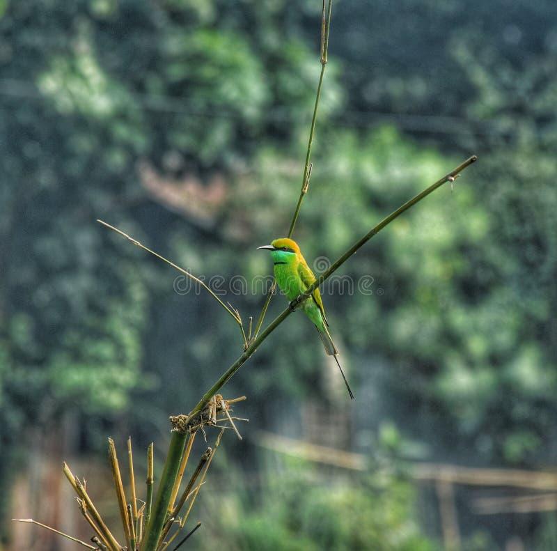 Un pappagallo che si siede sul ramo dell'albero immagine stock libera da diritti
