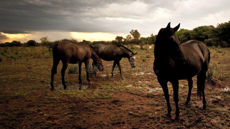 Un paquete de caballos en el prado imagen de archivo libre de regalías