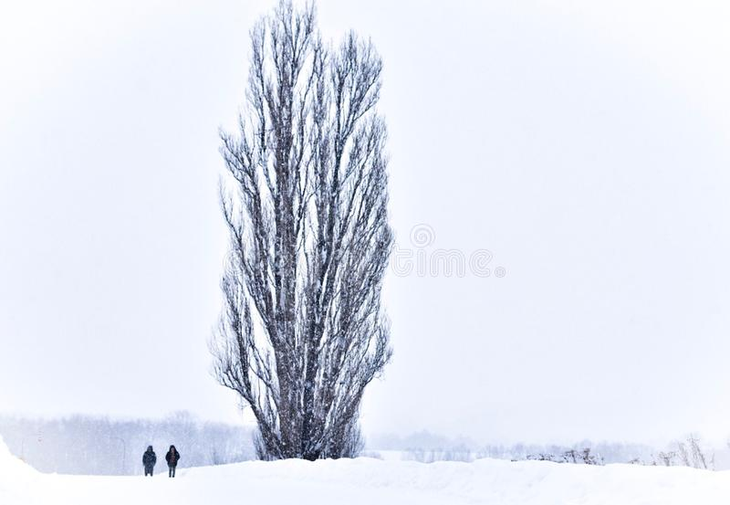 Un par al lado del árbol de Ken y de Maria imagen de archivo libre de regalías