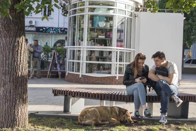 Un par cari?oso se est? sentando en un banco Perro rojo que miente en sus pies fotografía de archivo