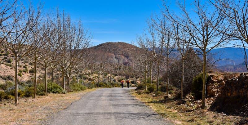 un par de caminantes masculinos en el extremo de una carretera de asfalto en el medio del campo con dos hileras de árboles sin la fotografía de archivo
