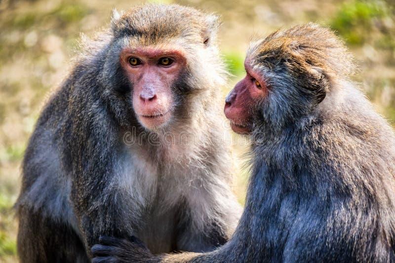 Un par de monos foto de archivo