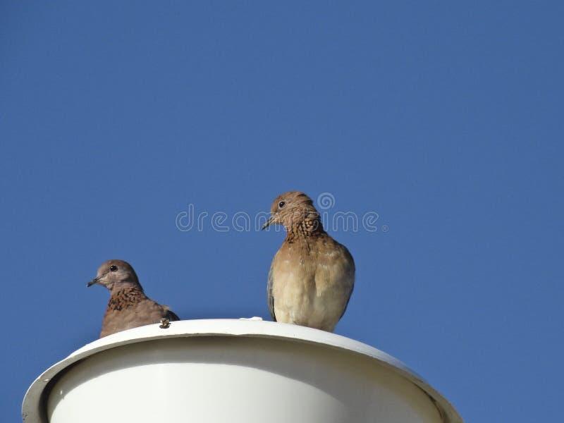 Un par de palomas de la tortuga se sienta en una linterna contra un cielo azul despejado imagenes de archivo